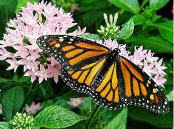 346-butterfly.jpg