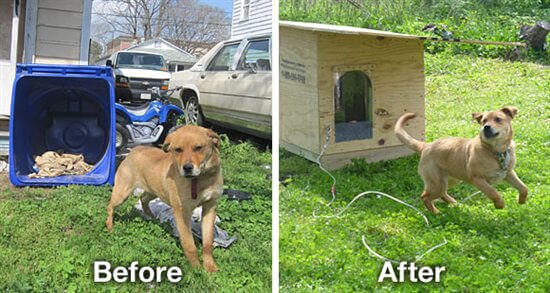 Fiesty the Dog Before and After