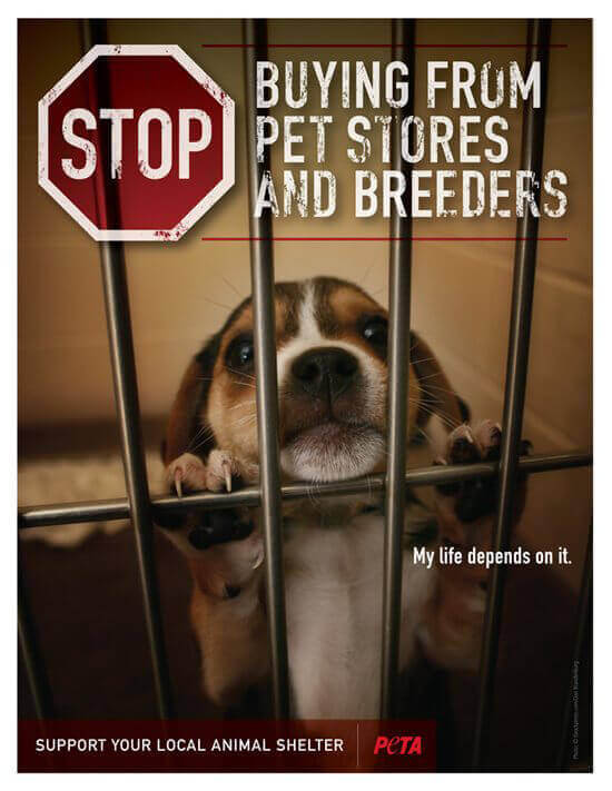 Stop Buying from Pet Stores and Breeders