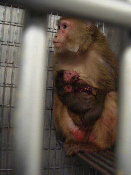13 Eye Opening Images Of Animals In Labs Peta