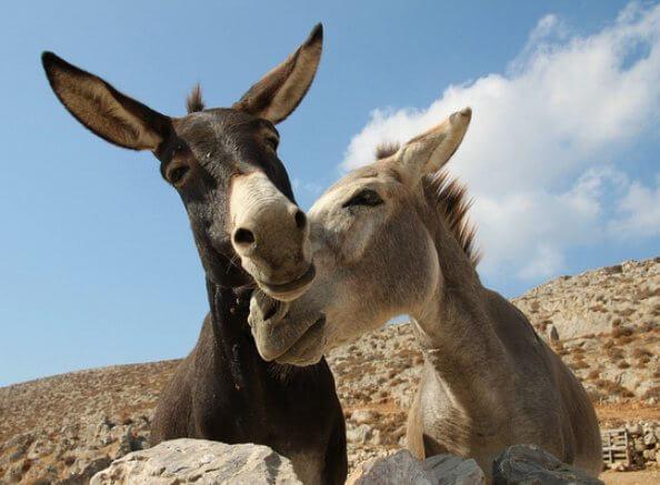 5100.donkeys.jpg