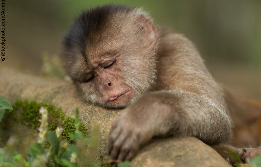 11 Things That Crystal the Monkey Would Rather Be Doing