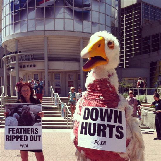 Canada Goose kensington parka replica store - Photo: PETA's Giant Plucked 'Goose' Ruffles Feathers | PETA's Blog ...