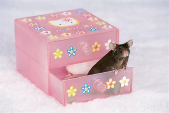Tulip Mouse Rescue
