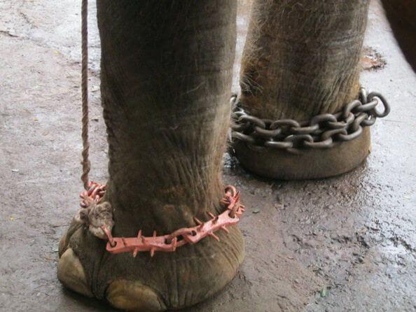 Sunder's Cruel Chains
