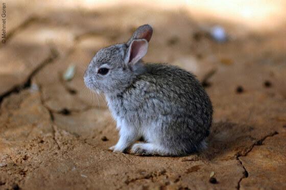 Fur Trim: Bad News for Bunnies