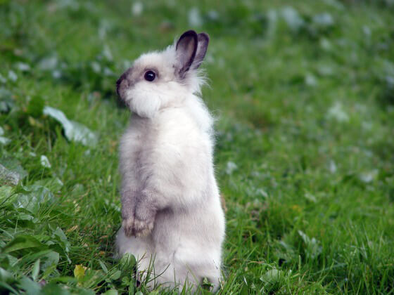 Four Stories That Prove Rabbits Are Not 'Starter Pets'