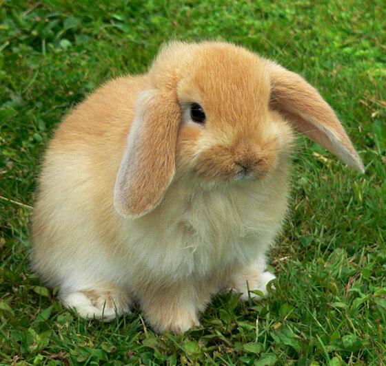 560x532_2D00_valentine-bunnys-honey.jpg