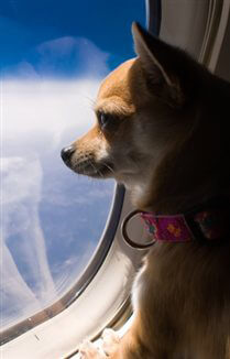 Dog Freezes To Death In Flight Peta