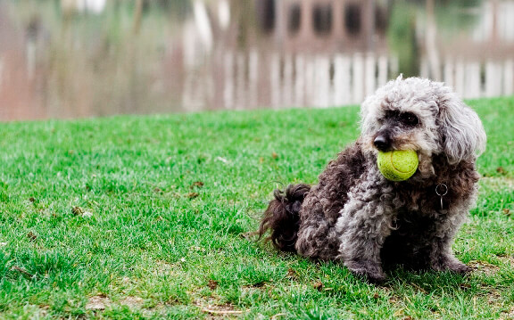 Five Things Dogs Would Appreciate More Than Beer