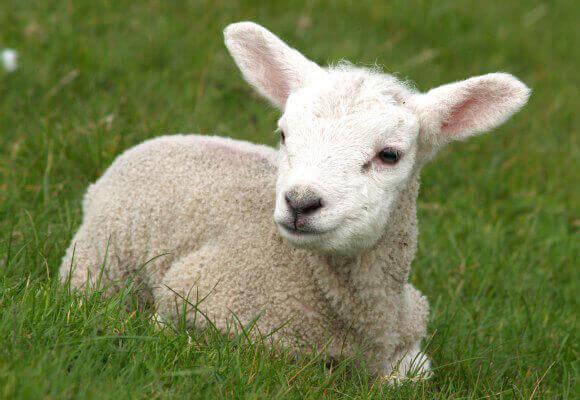 Ashley lamb 13 - 3 1