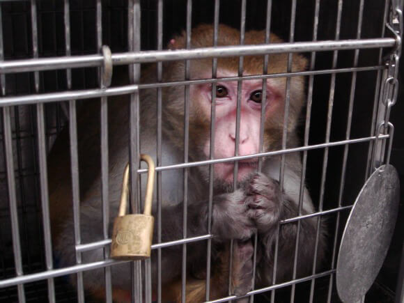 13 eyeopening images of animals in labs peta