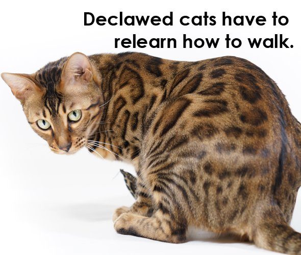 8 Reasons Why You Should Never Declaw Your Cats Peta