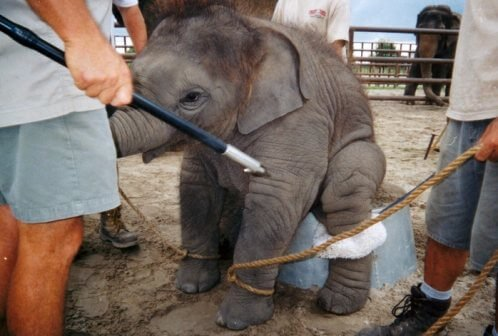 Ringling Phasing Out Elephants