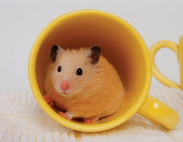 dizzy the hamster gets jazzy new life peta