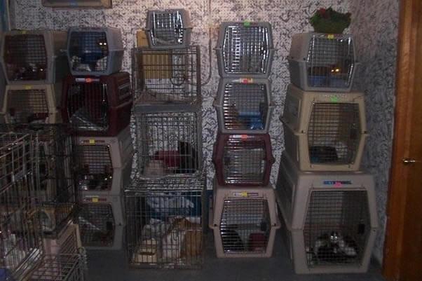 """Animals kept in crates at a """"no kill"""" shelter."""