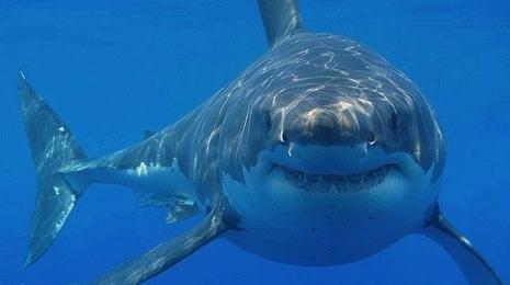 7271.Shark_5F00_465.jpg