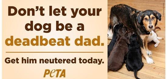 PETA Deadbeat Dad billboard