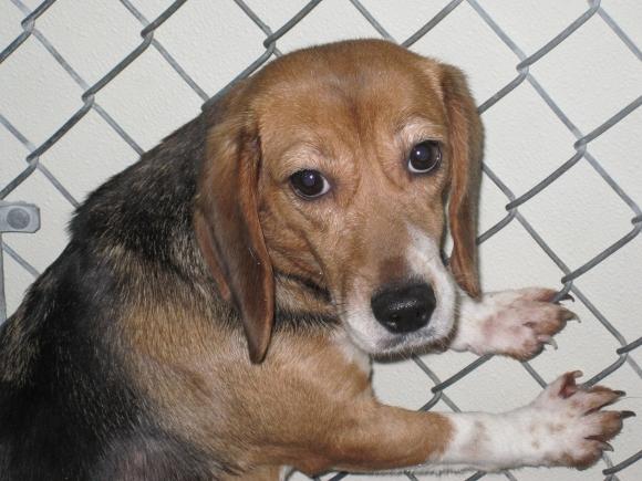 Beagle at PLRS
