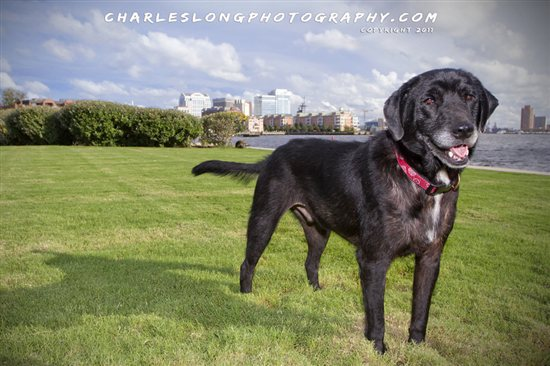 Take It From a Dog: Guest Post From Brophie | PETA