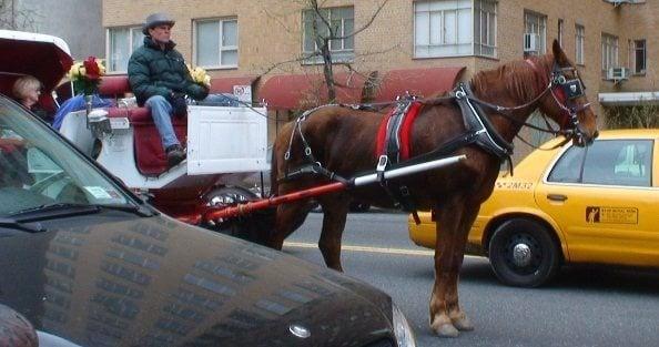 8204.Horse-Drawn-Carriage_5F00_sweaty-horse1.JPG