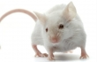 New Test Saves Thousands of Mice