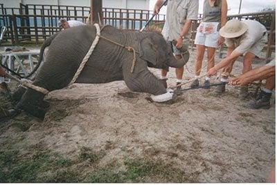 2016 – Ringling Ends Elephant Performances