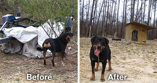 Bear the Dog Before and After