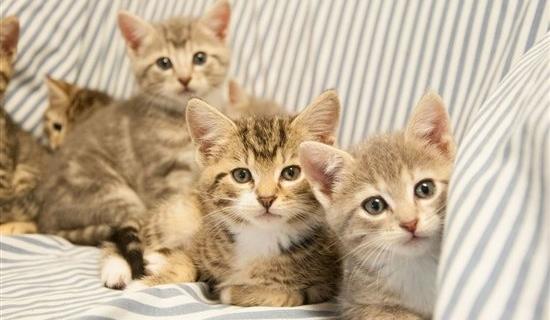 8865.Group-Shot-Kittens-Up-For-Adoption.jpg