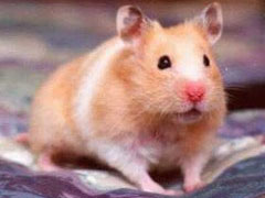Caring for Gerbils and Hamsters