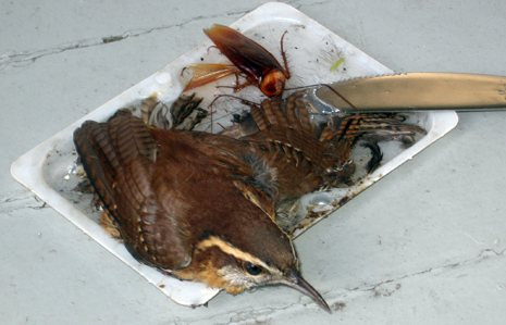 Walmart Yanks Glue Traps That Snagged Birds Peta
