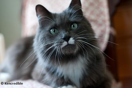 Declawing Cats Humane Not All Declawed Cats Become