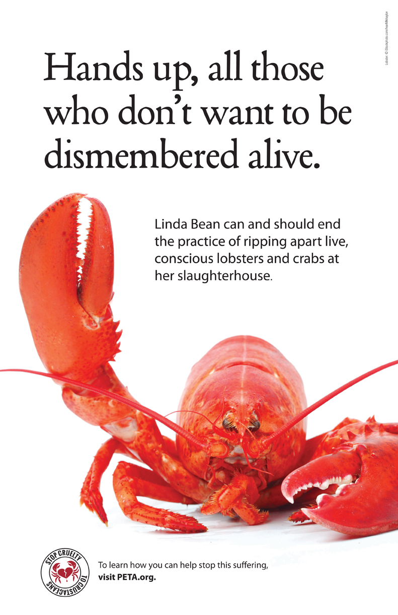 Linda \'Mean\' Maims Lobsters and Crabs—See What\'s Being Done About It ...