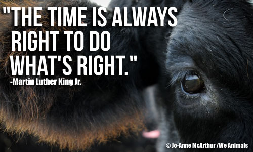 Animal Rights Quotes Best Martin Luther King Jrand Animal Rights  Peta