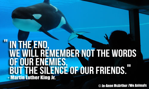 Whale at Marine Park and Martin Luther King Jr. Quote