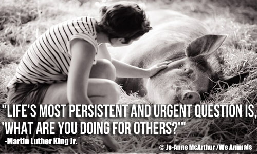 Woman Petting Pig and Martin Luther King Jr. Quote