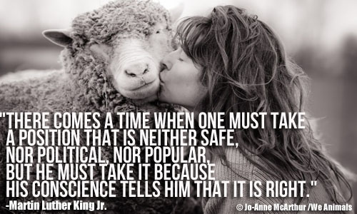 Woman Kissing Sheep and Martin Luther King Jr. Quote