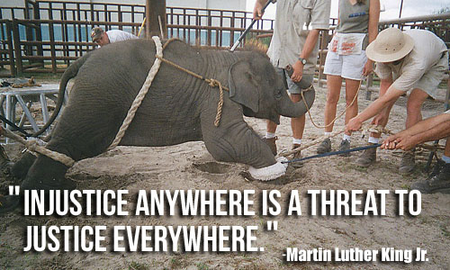 Ringling Elephant and Martin Luther King Jr. Quote