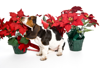 Protect Your Companion Animals During the Holidays