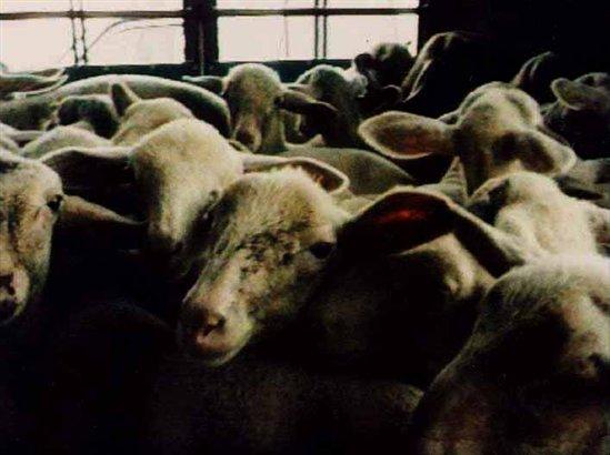 3b8c99849479 Ugg Boots Kill Animals