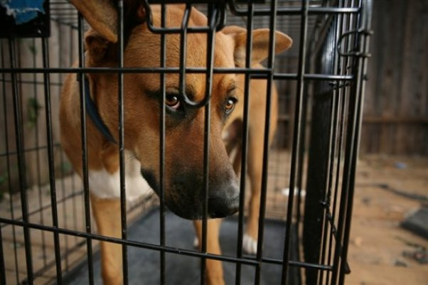 Free to a Good Home' = Death and Despair on Craigslist | PETA