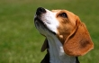 Victory! California Laboratories Must Try to Find Homes for Animals