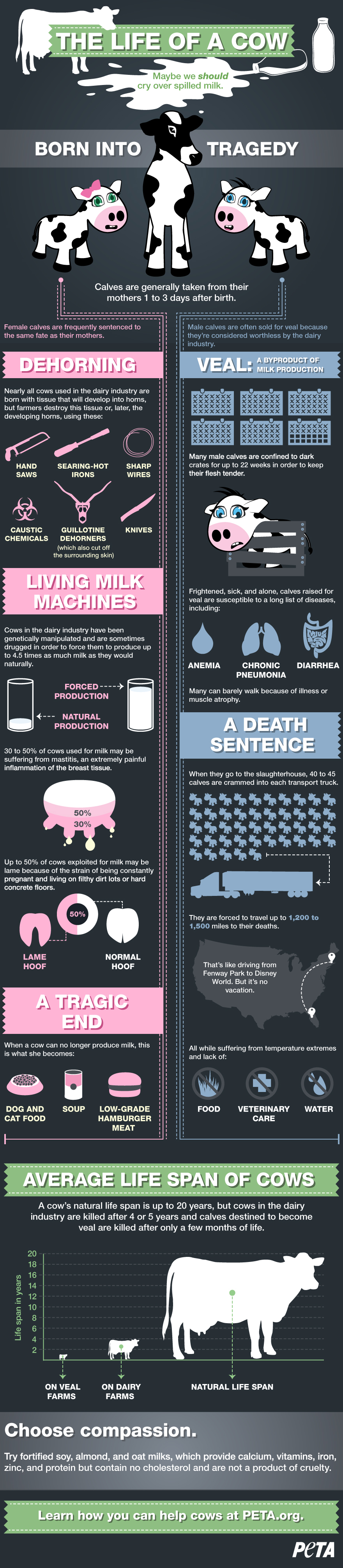 """""""The Life of A Cow (Infographic)"""" by PETA.com"""