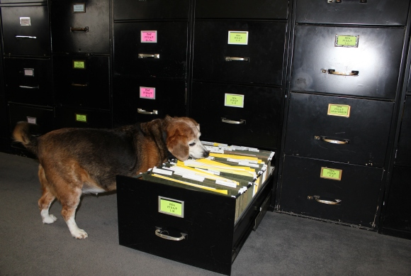 Dogs With Jobs (Photos)