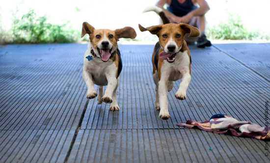 Here Are Some Tips for Dog Training and Dog Care