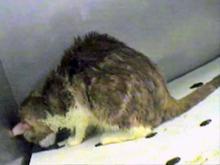 Cats in Laboratories   PETA
