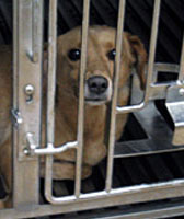 Lab Used By Iams Busted