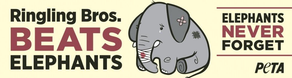 (VICTORY!) Ringling Bros. Beats Elephants