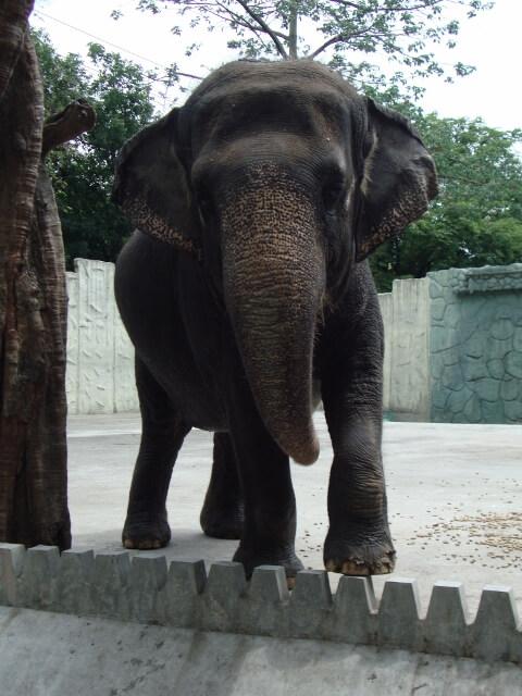 Manila Zoo's Mali the Elephant Needs Your Help