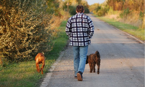 Walking Your Dog Is Better Than Hitting the Gym!
